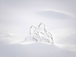 SnowPS2