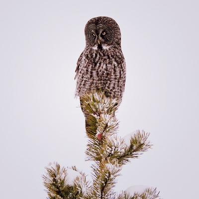 Owl-2c