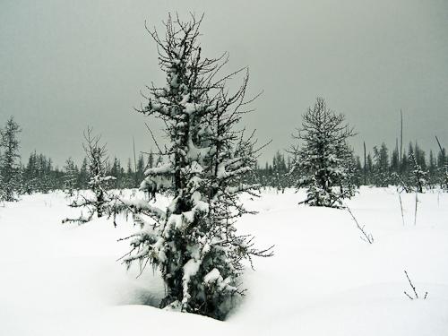 Muskeg&snow-1-2