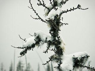 Muskeg&snow-2